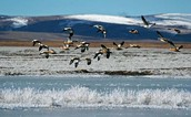 Qinghai Lake Natural Setting and Bird Life