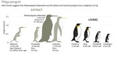 Penguin Fossil Record