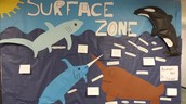 7th grade Oceanarium- surface zone