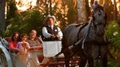 Carriage and Trail Rides Payment Update