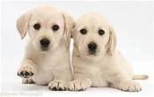 cute little puppys.i love puppys so much.