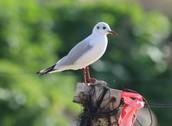 """יום עיון בנושא: """"חקר ציפורים בדגש למידה חוץ כיתתית"""" במעגן מיכאל."""