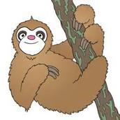 Sally the Sloth