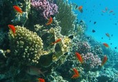 Coral reef with fish.