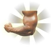 Muscualar system