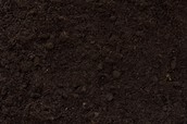 Very Fertile soil