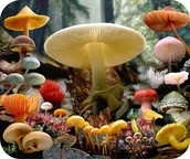 Characteristics of the Fungi Kingdom