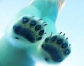 """Non-slip"" Footpads"