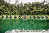 rainforest camp, cheow larn lake