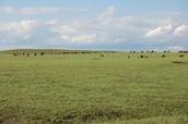 Great Plains. The zombie apocalypse.
