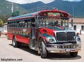Pollo Autobuses