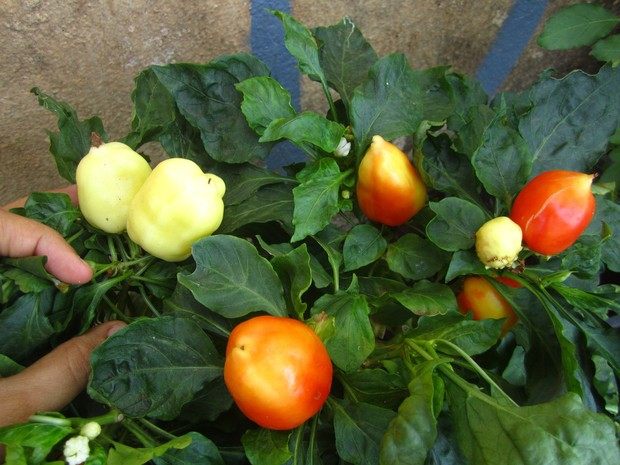 Merveilleux Growing Organic Vegetables In Pots