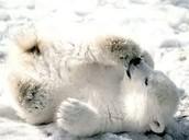 Little cub.