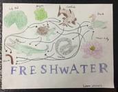 Freshwater Food Web