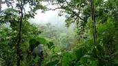 Trees in Amazon jungle