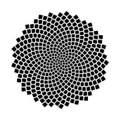 This is the pattern of a sunflower seed spiral