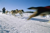 History of the Iditarod Trail