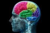 Brain Parts