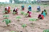 India farming/ jobs they had