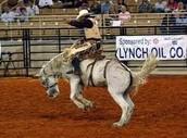 Rodeo Saddle Bronc Riding