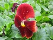Close Flower Shots