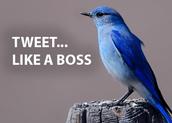 Maak snel twitter aan!