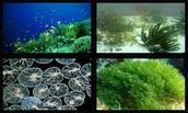Algas y protozoos: