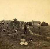 Slaves in South Carolina