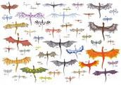 Dragon Breeds of the Temeraire series (Aerial View)