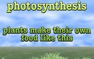 Photosyntesis