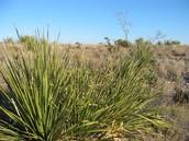 _-=Desert Plants!=-_
