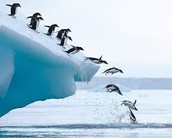 Diving peguins