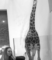 Jirafa en el Museo de Historia Natural