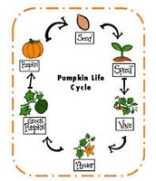 The story of the pumpkin