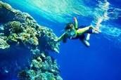 Puedes bucear en el mar de Perú con los pescados.