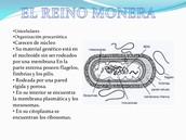 caracteristicas generales del Reino Monera