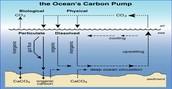 Carbon pump