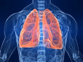 Effects on the Human Respiratory System