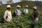 Jobs Hondurans typically found?