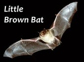 Why are bats important?