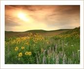 Prairie Wilderness Cemeteries