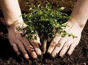 Planta mas arboles