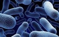 The Pneumonia Bacteria