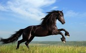 Join the best horse learning class, with high quality trained horses