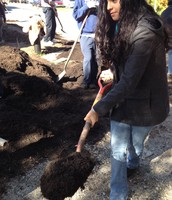 Getting soil with a shovel to fill a wheelbarrow.