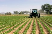 Maryland's Diverse Agriculture