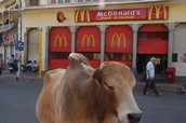 So there is a McDonald's in India?