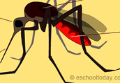 Treatment for malaria