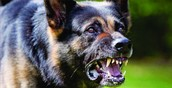 Dogs and Aggression