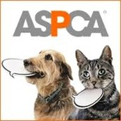 Get involved with the ASPCA & Donate Today!